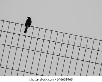 One little bird on thin wire fence on white background