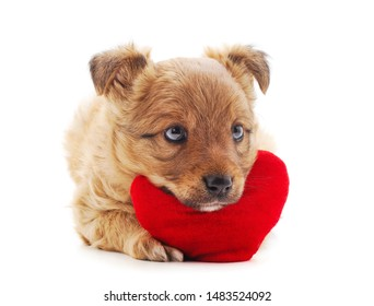 One little dog with a red heart isolated on a white background.