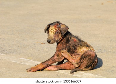 One little leprosy dog the skin is wound with bleeding and sitting on the floor