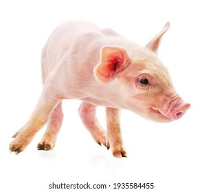 One little pink pig isolated on white background.