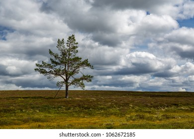 One lonely pine tree in a dramatic colorful mountain landscape with cloudy sky.