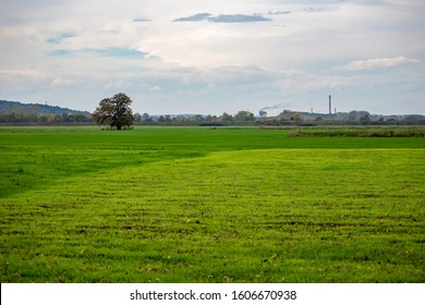 One lonely walnut tree in the middle of green field and smoking chemical factory chimney in the background, cloudy late autumn day. Photo from near Zlato Pole village, Dimitrovgrad, Haskovo, Bulgaria - Shutterstock ID 1606670938