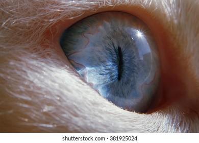 One macro blue eye. Cat eye
