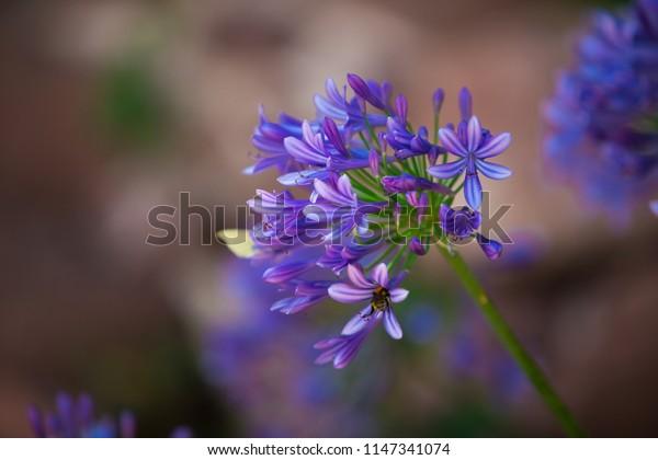 One magic flower