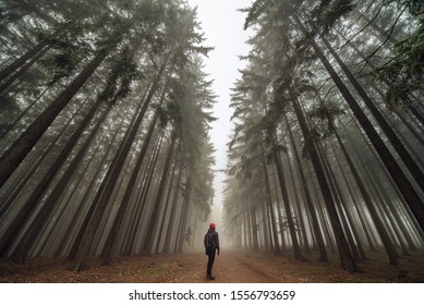 One man in a magical forest in a fantasy fog.