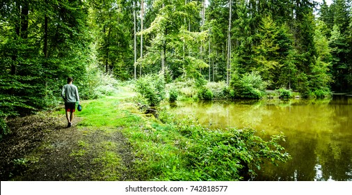 One man walking along the side of a lake in the middle of a pine forest in summer. Taken in Bavaria, Germany
