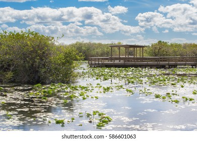 One of the many boardwalks in the Everglades National Park.