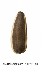 one melon seed isolated on the  white background