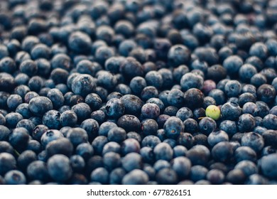 One in a Million Blueberries