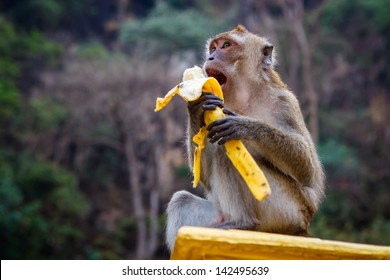 One monkey sits on the stone and eats banana