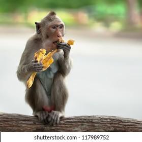 One monkey sits on the tree and eats banana