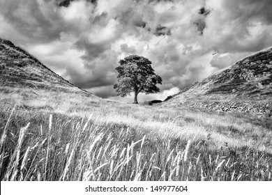 One of the most famous points on Hadrian�s Wall is Sycamore Gap, where a beautiful sycamore tree has withstood the rigours of the Northumberland weather for many years.