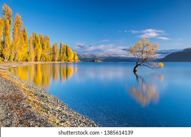 One of the most photographed trees in the world and with good reason, the Wanaka tree in Lake Wanaka attracts thousands of visitors every year.