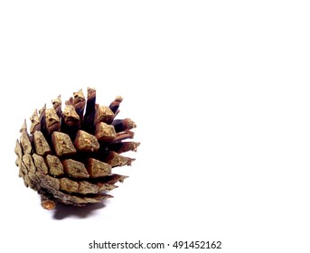 One natural pine cones isolated on white background, close-up