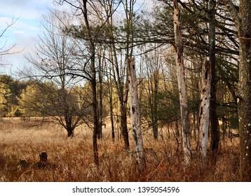 One With Nature - Poconos, Pennsylvania