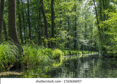 One of the numerous water canals in biosphere reserve Spree forest (Spreewald) in Luebbenau, Brandenburg, Germany