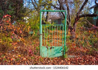 One old iron green gate in an abandoned autumn garden