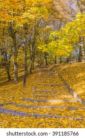 One of the oldest and most beautiful parks in Lviv (Ukraine), a monument of landscape art of national importance.