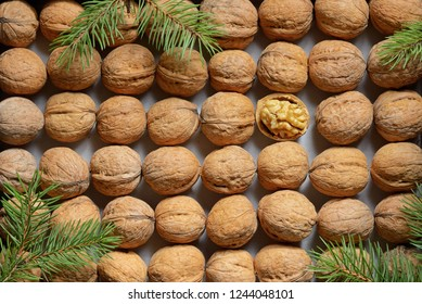 One opened walnut among rows walnuts background