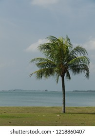 One Palm Tree at beach with view on ocean on a hazy day