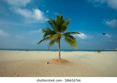 One palm tree on the sandy beach of the Indian Ocean