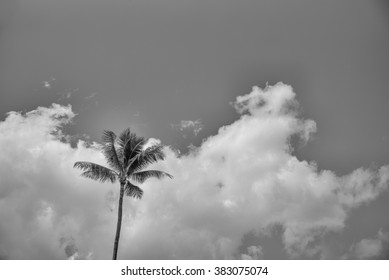 One Palm Tree.  Single Palm tree against a partly cloudy Hawaiian sky.
