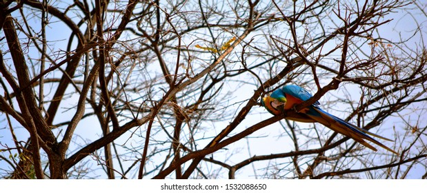 one parrot on a tree in a tree