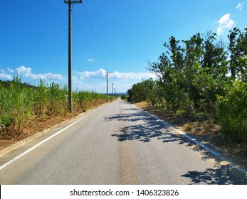 One path in the blue sky and sugar cane field