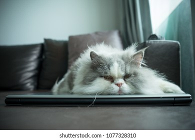 One Persian cat sleeps on the silver laptop and brown sofa, lonely, bored and tired.
