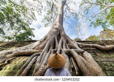 One person looking at Ta Prohm famous jungle tree roots embracing Angkor temples, revenge of nature against human buildings, travel destination Cambodia.