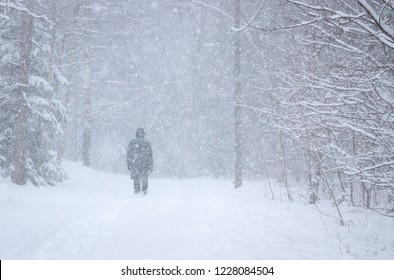 One person walking a small road through trees in a cold Swedish winter snow blizzard