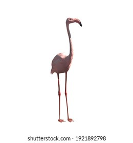 one pink flamingo closeup, stand on white background; isolated