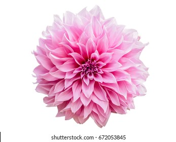 one pink flower on white background