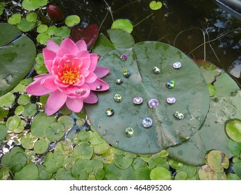 One pink flower in a pond