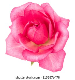 Single flower images stock photos vectors shutterstock one pink rose flower isolated on white background cutout mightylinksfo