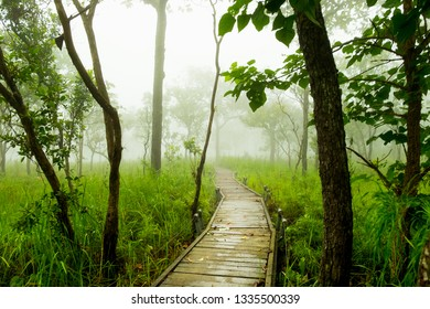 One of place for sightseeing by walking along the wooden bridge and surrounded by the mist. Siam Tulips Flower Field, a pink flowers and tropical plant which grow up in Rainy season. Thailand.