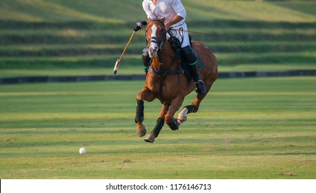 One Polo Horse Player Riding To Control The Ball.