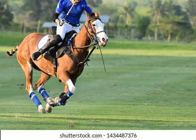 One Polo Horse Player Riding,Action of Horse Polo Player and Ponies in Match.