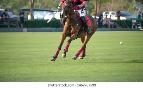 One Polo player and horse playing in Polo Club.