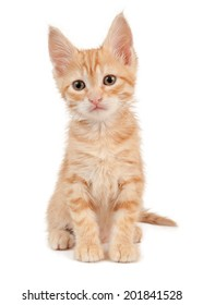 One red kitten on a white isolated background look ahead