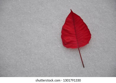 One red poinsettia leaf in a snow backgrounds