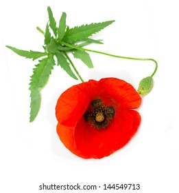 Poppy leaf images stock photos vectors shutterstock one red poppy with green leaves isolated on white background mightylinksfo