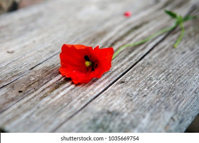 one red poppy lying on wooden plank