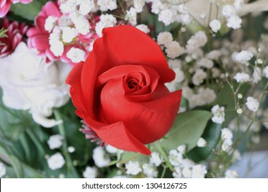 One red rose flower
