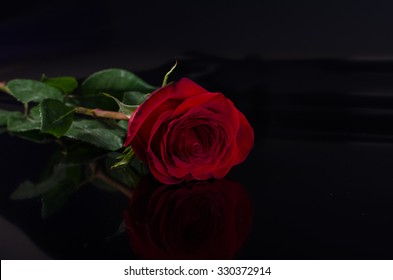one red rose on a black background