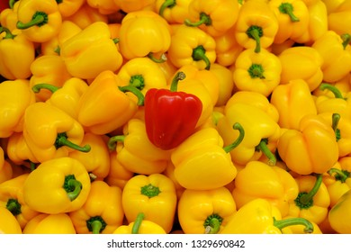 One Red and Some Yellow Bell Peppers, red capsicum and yellow capsicum or bell peppers, one in many, odd one out, Red bell pepper one of group species capsicum  contrast with yellow bell pepper around