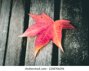 One red yellow leaf resting on a wooden bench during fall in a park in Belgium.