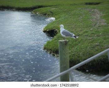 One Resting Seagull on a pole