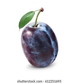 One ripe plum isolated on white background