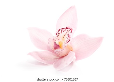 one rosy beautiful orchid isolated on white background